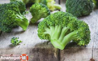 Брокколи при грудном вскармливании: рецепты, которые можно кормящей маме