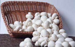 Можно ли шампиньоны при грудном вскармливании: диета кормящей мамы при гв