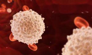 Лейкоцитоз (повышенные лейкоциты в крови): что это, причины и лечение у взрослых
