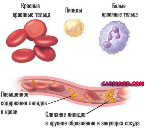 Какие продукты повышают давление у человека: список при гипотониии и гипертонии