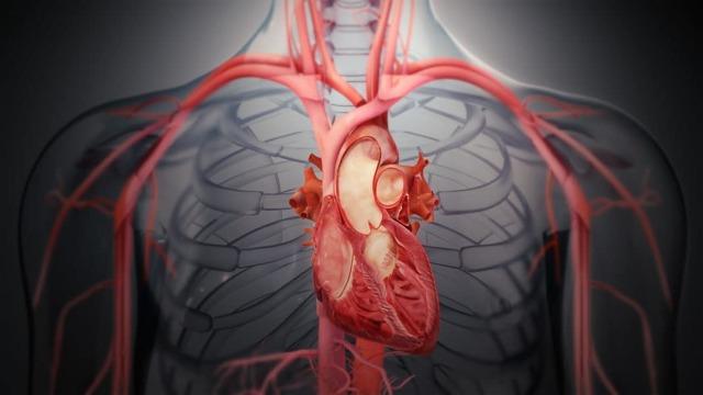 Сердечные гликозиды: список и названия препаратов, что это такое, механизм действия