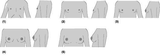 Почему не растет грудь или растет медленно: что делать для роста грудных желез