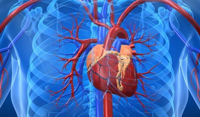 Ноющая боль в области сердца: что это может быть, причины и симптомы