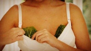 Капустный лист при лактостазе: как прикладывать на грудь во время застоя молока