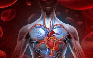 Народные средства улучшающие мозговое кровообращение и память