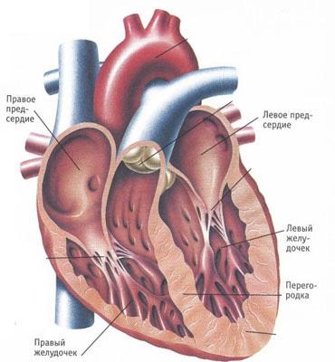 Острая сердечная недостаточность: симптомы, причины и неотложная помощь