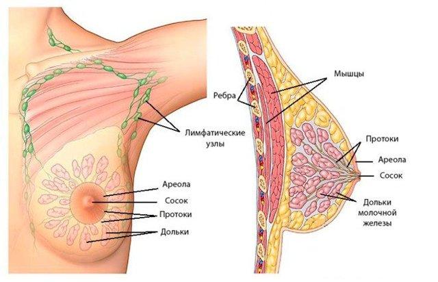 УЗИ груди: когда и на какой день цикла лучше делать УЗИ молочных желез