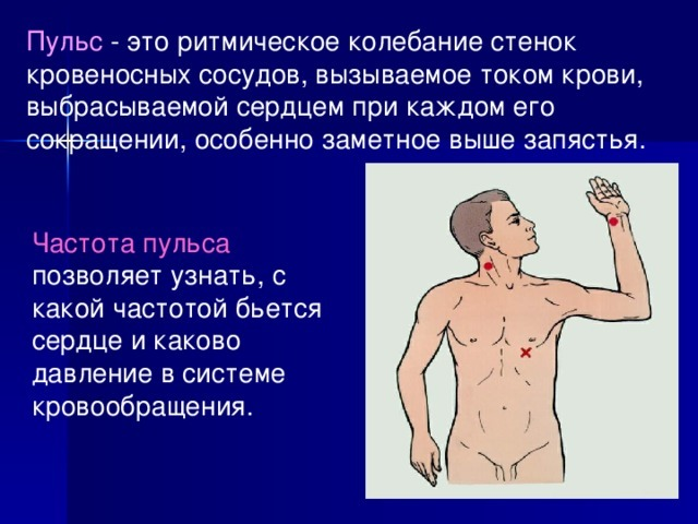 Нормы пульса по возрастам у мужчин: таблица значений