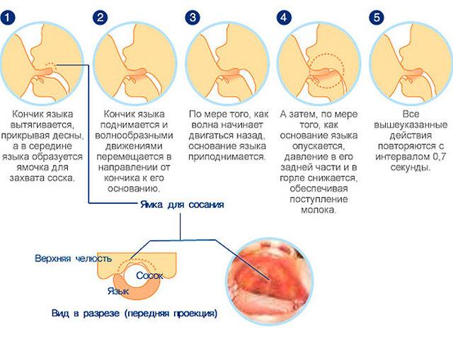 Ребенок кусает во время кормления: что делать, как отучить грудничка от привычки