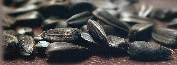 Можно ли семечки при грудном вскармливании: подсолнуха, тыквенные, кунжутные