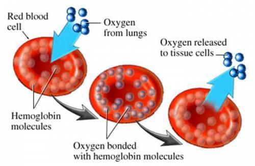 Железодефицитная анемия: симптомы, причины и лечение у женщин и мужчин