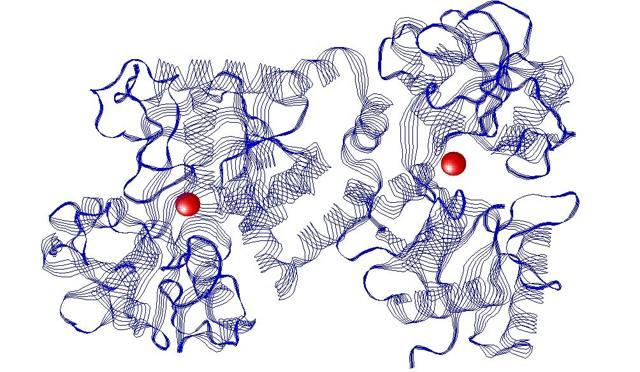Трансферрин: что это, норма, понижен, повышен в анализе крови