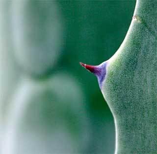 Чешется правая грудь у женщины: почему и что делать; народные приметы